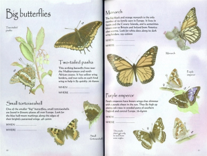 Butterflies Sticker Book1