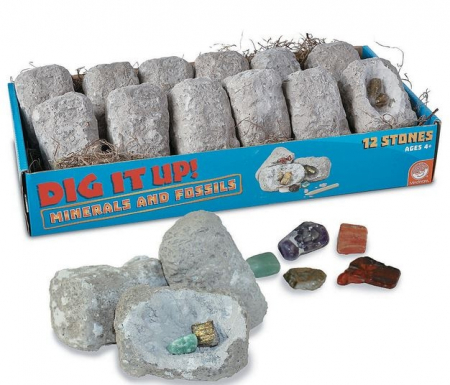 Dig It Up! Fossils & Minerals1