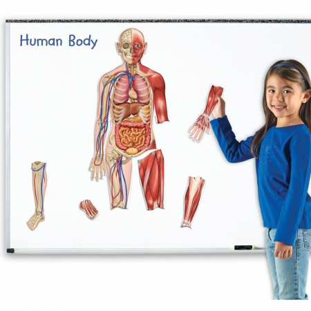 Learning Resources Corpul uman - set magnetic2