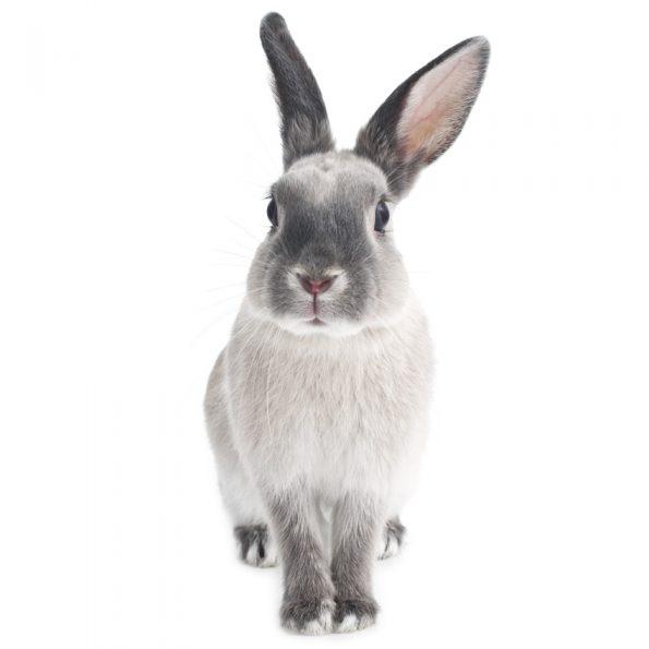 Autocolant Camera Copii Harry The Rabbit [1]