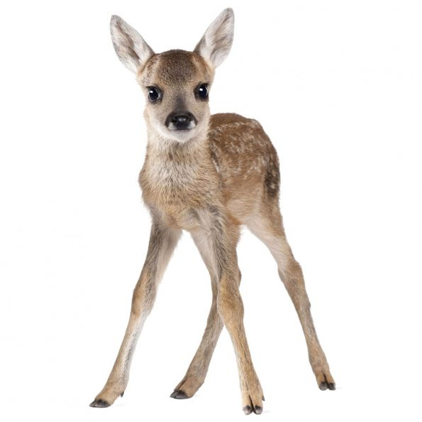Autocolant Camera Copii Lucy My Deer [0]