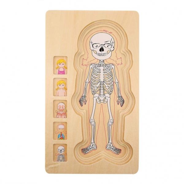 Puzzle lemn incastru Corpul uman AnatomieOnshine 2