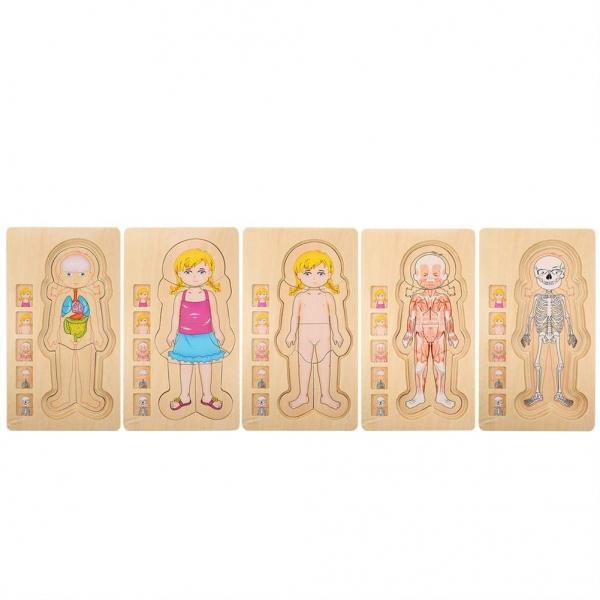 Puzzle lemn incastru Corpul uman AnatomieOnshine 7