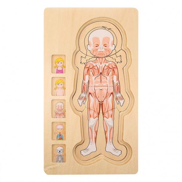 Puzzle lemn incastru Corpul uman AnatomieOnshine 4