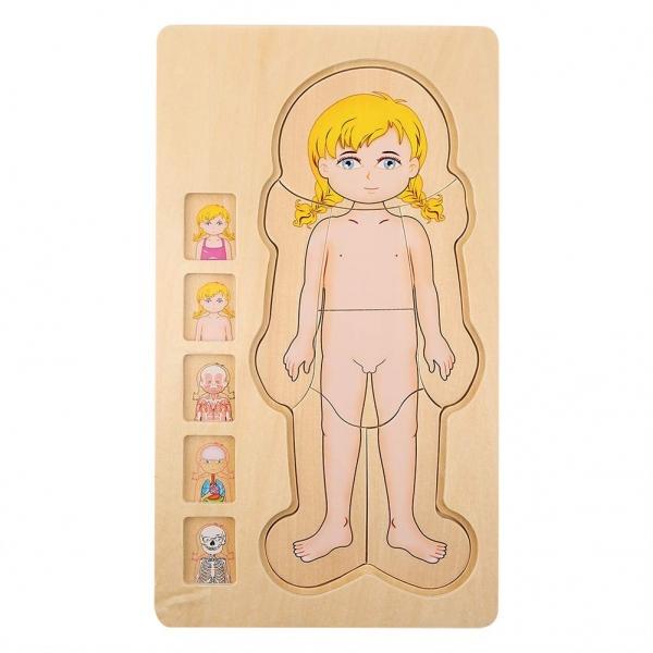 Puzzle lemn incastru Corpul uman AnatomieOnshine 5