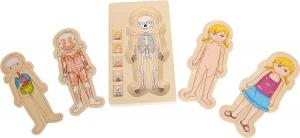 Puzzle Lemn Incastru Corpul Uman - Anatomie Onshine8