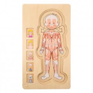 Puzzle Lemn Incastru Corpul Uman - Anatomie Onshine4
