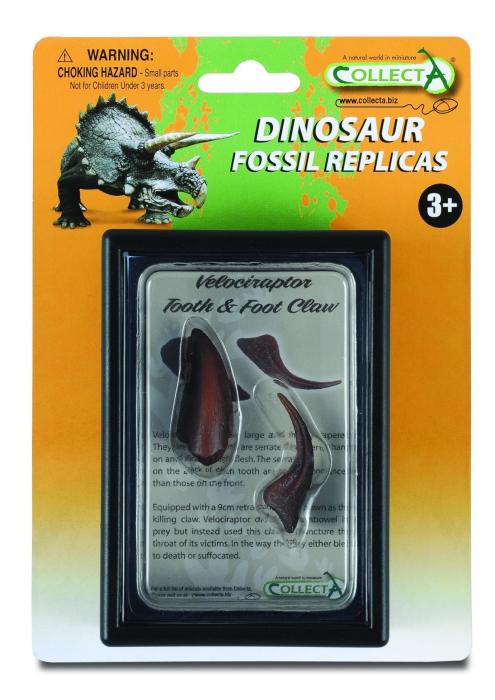 Figurina Dinte si Gheara de Velociraptor Box Set Collecta 1