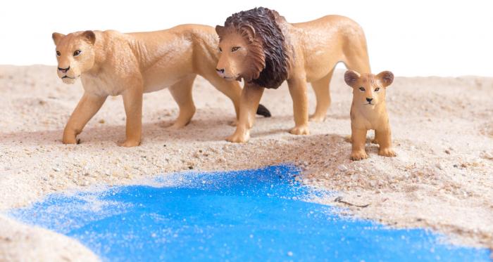 Animale de pe savana Africană 4