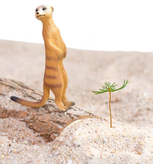 Animale din Africa realistice 4