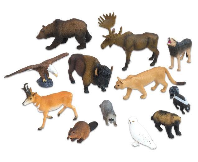 Animale din America de Nord 0