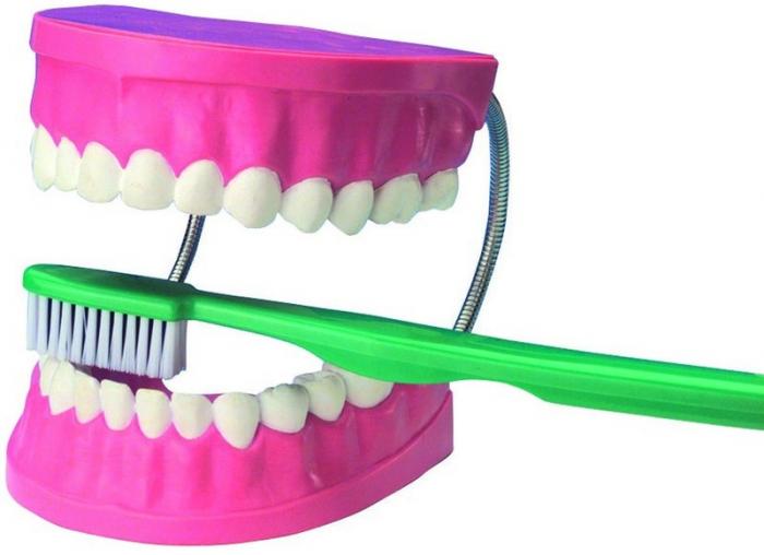 Model dantura GIGANT + 1 bucata perie de dinti 0