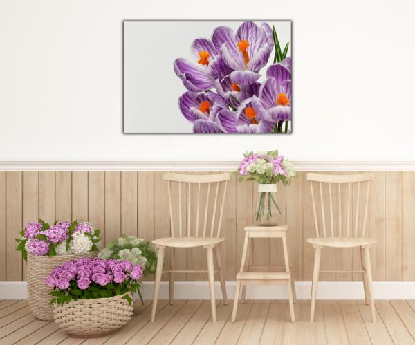 Tablou modern pe panou - beautiful crocuses flowers 4