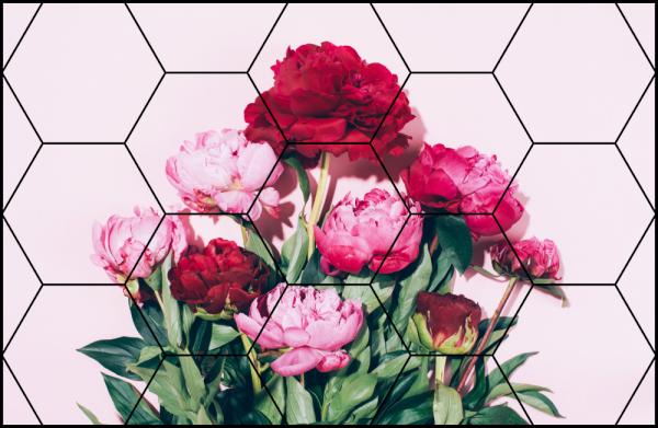 Tablou modern pe panou - pink peony flowers 0