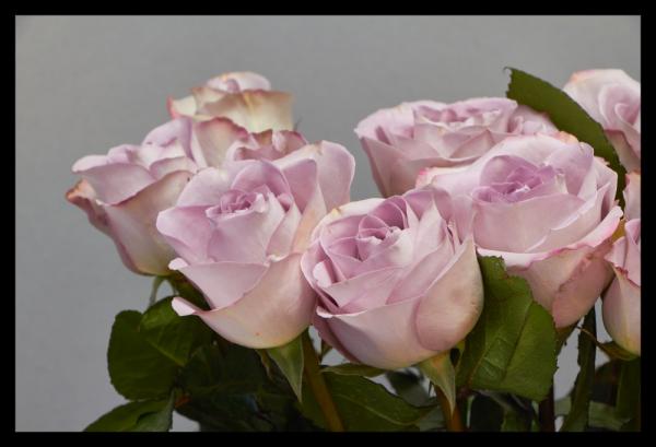 Tablou modern pe panou - bouquet blooming pink roses 0