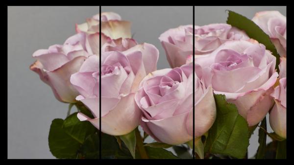Tablou modern pe panou - bouquet blooming pink roses 10