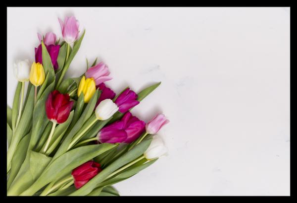 Tablou modern pe panou - colorful tulip flowers 0