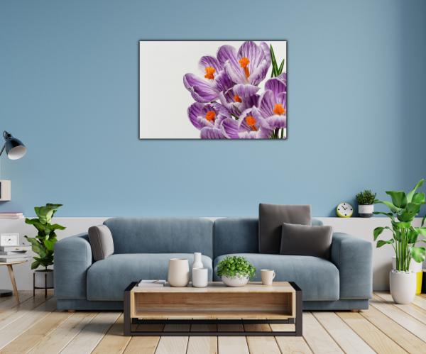 Tablou modern pe panou - beautiful crocuses flowers 1