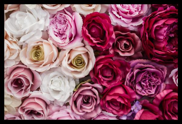 Tablou modern pe panou - pink red white roses 0
