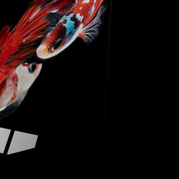 Tablou din sticla acrilica - beautiful koi fish [1]