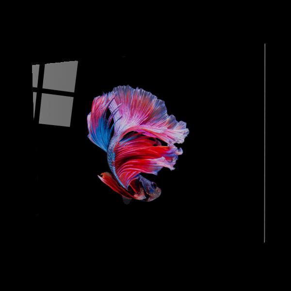 Tablou din sticla acrilica - betta fish 0
