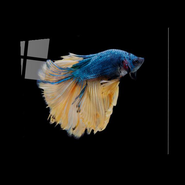 Tablou din sticla acrilica - betta fish media luna 0
