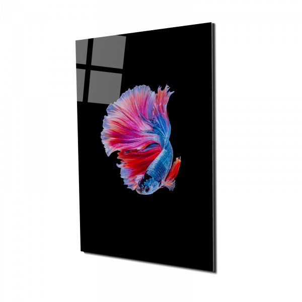 Tablou din sticla acrilica - colorful betta fish 0