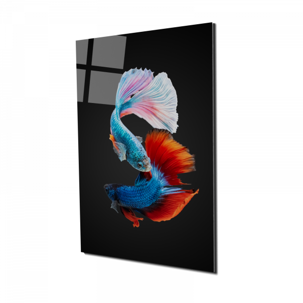 Tablou din sticla acrilica - colorful fighting fish 0