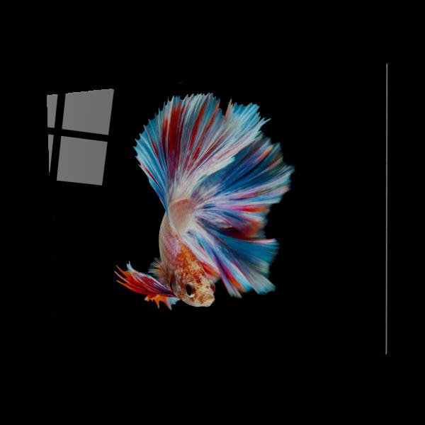 Tablou din sticla acrilica - colorful fish 0