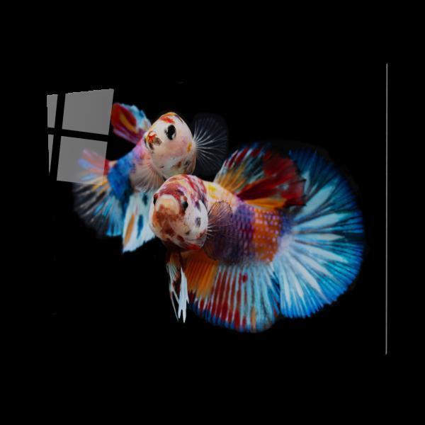 Tablou din sticla acrilica - fancy koi fish 0