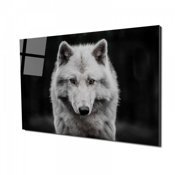 Tablou din sticla acrilica - polar wolf 0