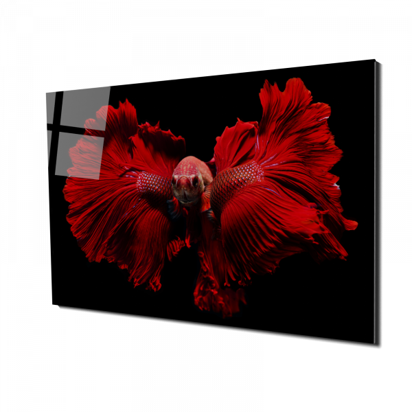 Tablou din sticla acrilica - red fighting fish 0