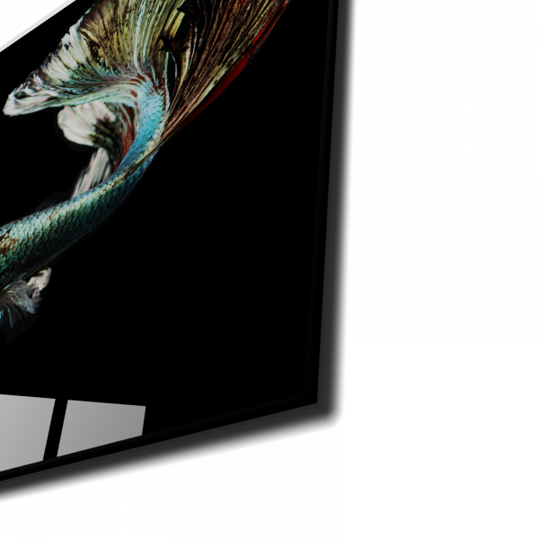 Tablou din sticla acrilica - silver betta fish 1