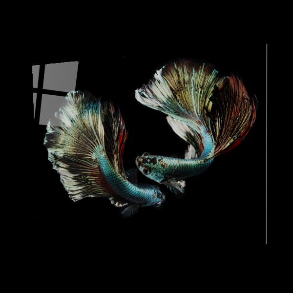 Tablou din sticla acrilica - silver betta fish 0