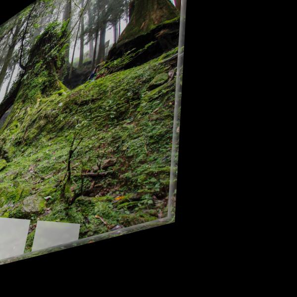 Tablou din sticla acrilica - walkway forest 1