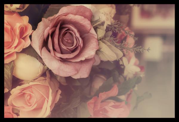 Tablou modern pe panou - colorful pink roses 0