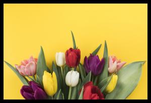 Tablou modern pe panou - muchos tulipanes0