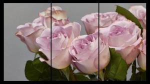 Tablou modern pe panou - bouquet blooming pink roses10