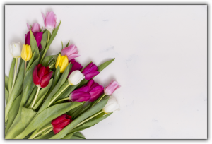 Tablou modern pe panou - colorful tulip flowers0