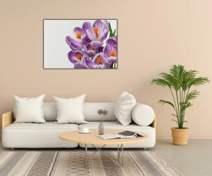 Tablou modern pe panou - beautiful crocuses flowers2