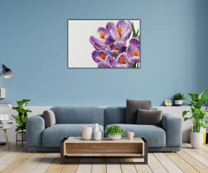 Tablou modern pe panou - beautiful crocuses flowers1