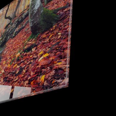 Tablou din sticla acrilica - autumn forest waterfall1
