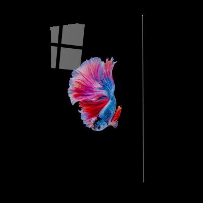 Tablou din sticla acrilica - colorful betta fish0