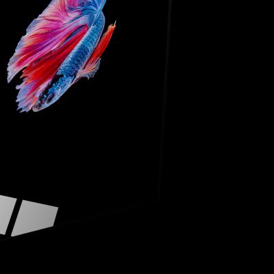 Tablou din sticla acrilica - colorful betta fish1