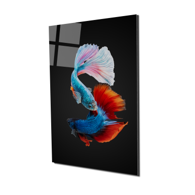 Tablou din sticla acrilica - colorful fighting fish0