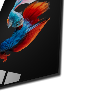 Tablou din sticla acrilica - colorful fighting fish1