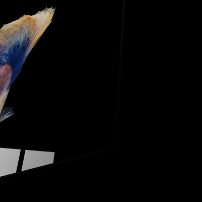 Tablou din sticla acrilica - halfmoon betta fish [1]
