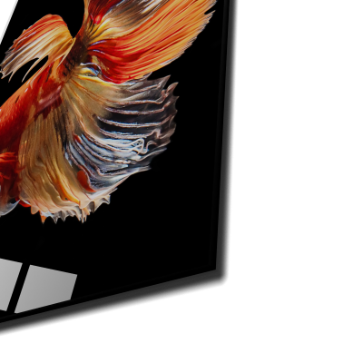 Tablou din sticla acrilica - halfmoon simaese fighting fish1