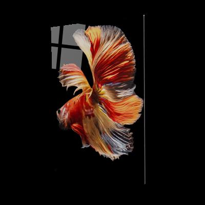 Tablou din sticla acrilica - halfmoon simaese fighting fish0