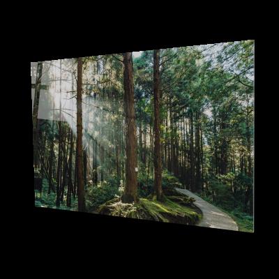 Tablou din sticla acrilica - Padure de cedru [0]